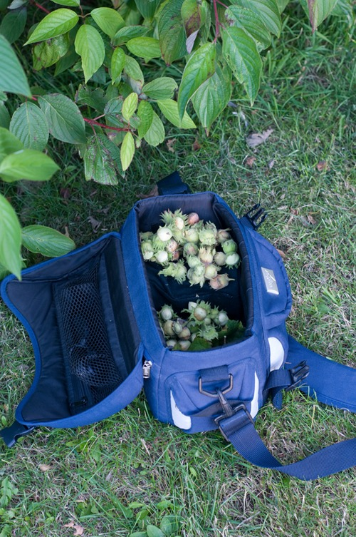 Camera bag full of Hazelnuts